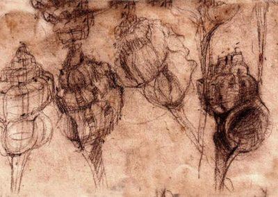 study-of-shells